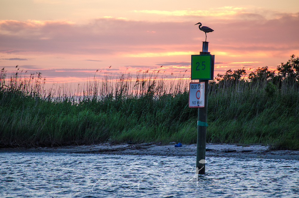 A heron perches as the sun sets near the Bayou La Batre State Docks in Bayou La Batre, Alabama June 17, 2013. (Photo by Carmen K. Sisson/Cloudybright)