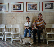 A father and daughter bring in their two six week old puppies for an examination. Aniplant, Cuba.