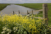 An idyllic landscape of artificial dyke waters on Halstow Marshes, near Halstow on the Kent Thames estuary marshes, potentially threatened by the future London airport.