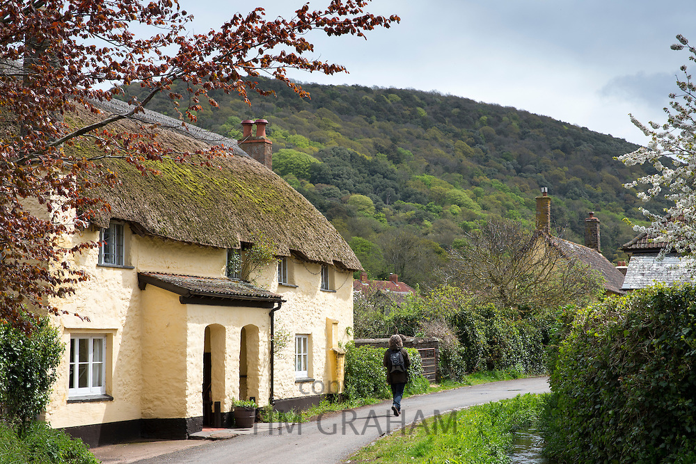 Lone walker passes quaint traditional thatched cottage in Bossington in Exmoor, Somerset, United Kingdom