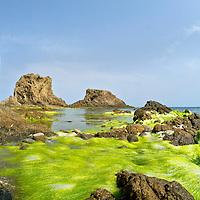Alberto Carrera, El Dedo Reef, Finger Reef, Cala Rajá, Cabo de Gata-Níjar Natural Park, Biosphere Reserve, Almería, Andalucia, Spain, Europe