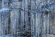 Oak tree and ice, Yosemite National Park, California  2004