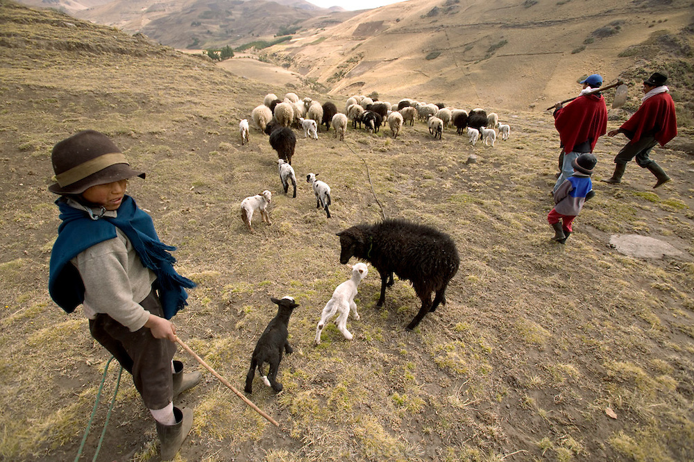 (MODEL RELEASED IMAGE) The Ayme family heads off to cultivate one of their potato fields on their small farm in the village of Tingo, near Simiatug, Ecuador. (Supporting image from the project Hungry Planet: What the World Eats.)