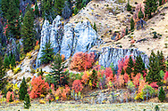 Autumn in the Wyoming Range outside of Alpine Wyoming.  The mountain maples light up in a blaze of iridescent tangerine while waiting for their slower cousins, the aspen and cottonwoods, to join the festival of color.