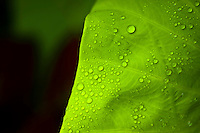 Wet green leaf with waterdroplets.