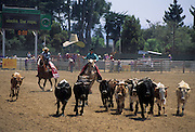 Salinas Rodeo, Salinas, California