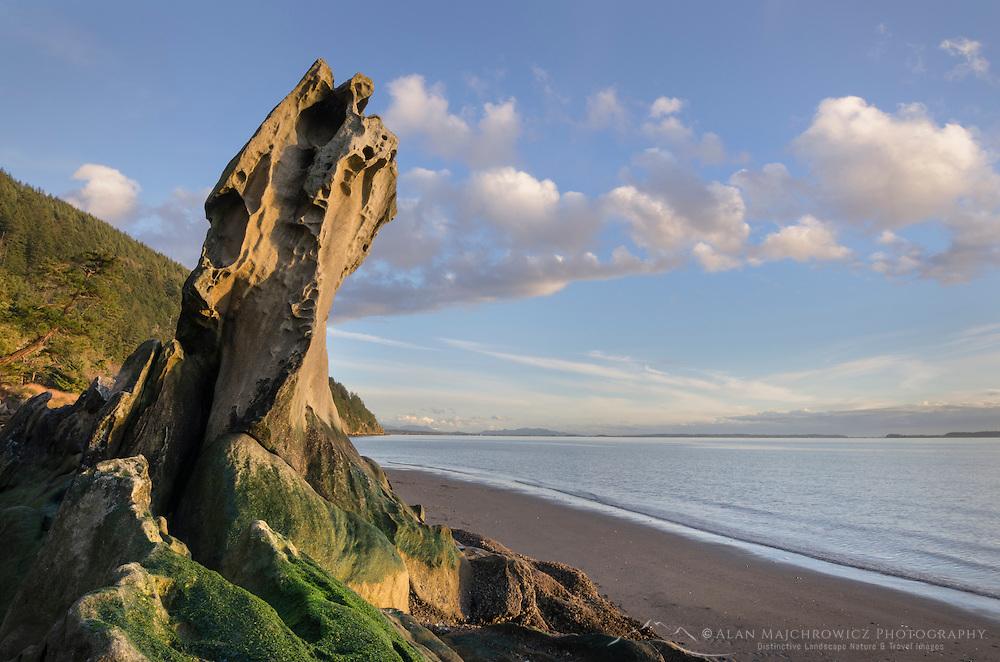 Weathered vertical sandstone rock of the Chuckanut Formation. Clayton Beach Larrabee State Park Washington