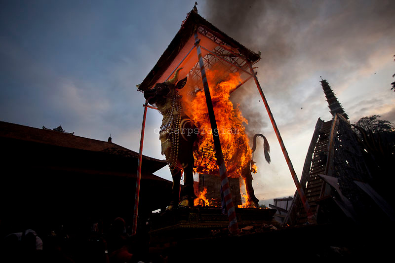 The Lembu burned while Pelebon ceremony of Anak Agung Niang Rai of Puri Agung Ubud, The wife of King Of Ubud. Pelebon Ceremony or  Ngaben ceremony is a ceremony to purify and return the  five element of the universe that form the life itself in human body to the universe