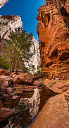 Sandstone walls reflect in Spring Canyon in Capitol Reef NP, Torrey, Utah, USA. In Capitol Reef National Park, we hiked impressive sandstone gorges from Chimney Rock Trailhead over to Spring Canyon and down to a car shuttle at Highway 24 (10 miles one way with 1100 ft descent and 370 ft gain). This image was stitched from multiple overlapping photos.