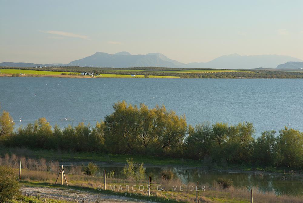 EN. View of the Fuente de Piedra Lagoon, M&aacute;laga province, Andalucia, Spain.<br /> ES. Vista de la laguna de Fuente de Piedra, M&aacute;laga, Andaluc&iacute;a, Espa&ntilde;a.
