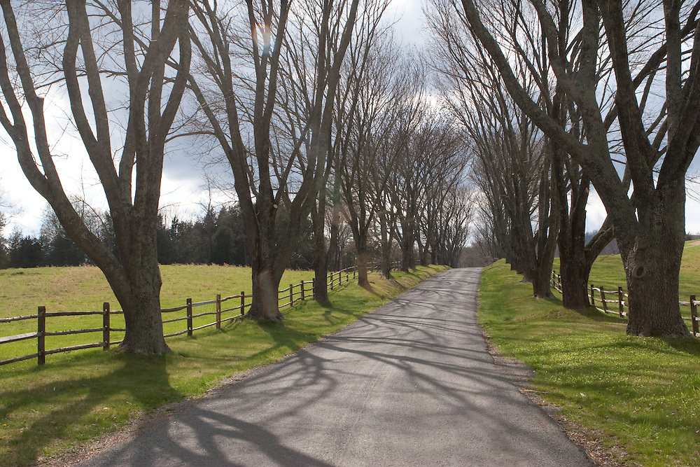 The front drive of Ash-Lawn Highland, framed by trees, home of President James Monroe.