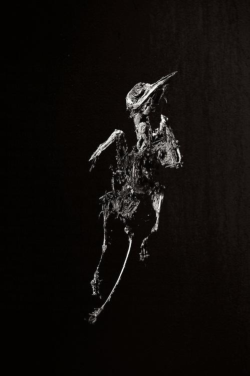 detailed bird skeleton seeming to ascend towards heaven