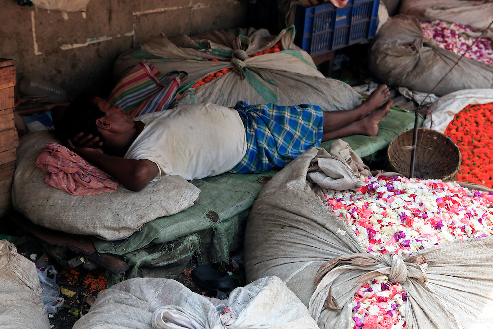 Asia, India, Calcutta. Scene from the flower market in Calcutta - a vendor rests amongst his bags of freshly cut flowers.