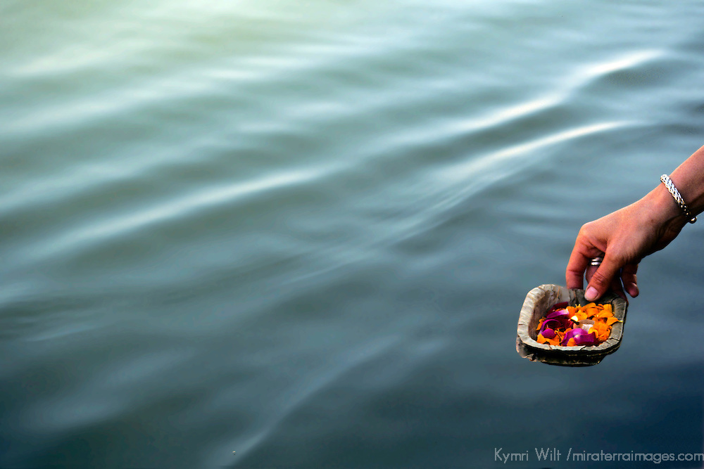 Asia, India, Uttar Pradesh, Varanasi. Ritual of sacred offerings float the Ganges River in Varanasi.
