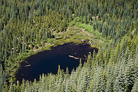 A view of the smaller of two lakes known as the Anderson lakes seen from the High Hut Ridge of Mount Tahoma Trails in the Tahoma state Forest of Washington state, USA.