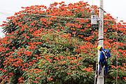 Conselheiro Lafaiete_MG, Brasil...Operarios trabalhando na eletrificacao rural no Programa Luz para todos em Conselheiro Lafaiete...Workers working in the rural electrification, for Luz para Todos program, in Conselheiro Lafaiete...FOTO: LEO DRUMOND / NITRO