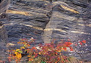 Autumn foliage and rock at Lily Pond, Whiteshell Provincial Park, Manitoba, Canada
