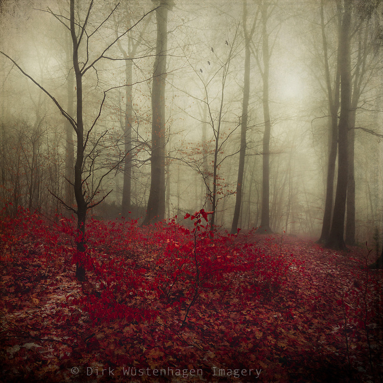 Forest on a misty day with fall leaves - textured photograph<br />