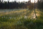 Idaho, Stanley, Stanley Lake, Sawtooth Mountains. A steaming marsh at the outlet from Stanley Lake at sunrise. PLEASE CONTACT US FOR DIGITAL DOWNLOAD AND PRICING.