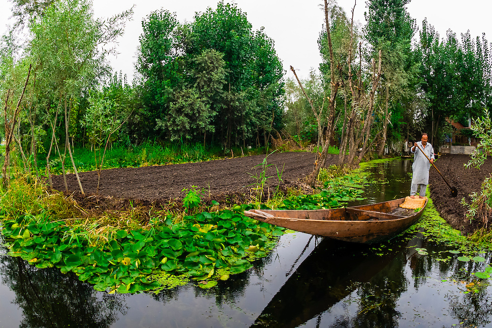 Rowing canoes along canals, Dal Lake in Srinagar, Kashmir, Jammu and Kashmir State, India.