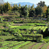 Community Garden in Luang Prabang, Laos<br />