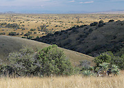 Grasslands near Kentucky Camp, Sonoita