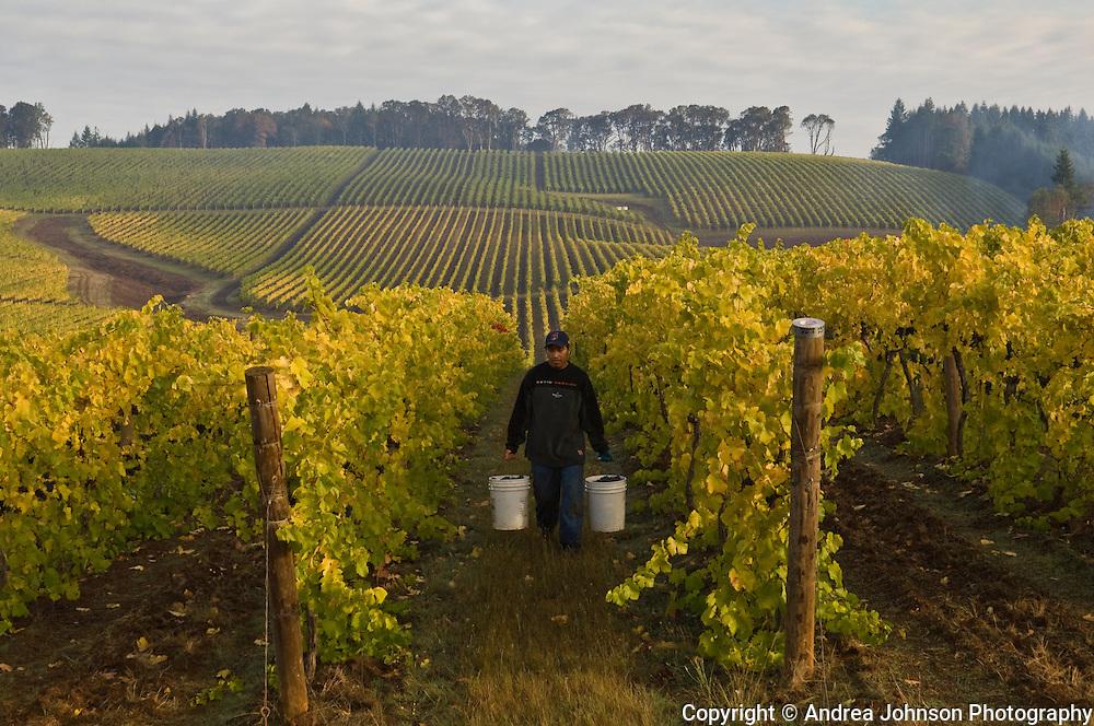 Harvest 2007 Hyland Vineyard, McMinville, Oregon