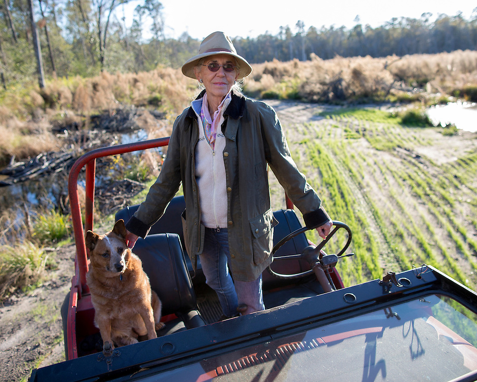 OLIVER, GA - DEC., 15, 2016: Lynda Beam and her Australian Healer Lila drive on her TooHolly farm, Thursday, December 15, 2016, in Oliver, Ga. (Photo by Stephen B. Morton for Georgia Forestry Magazine)