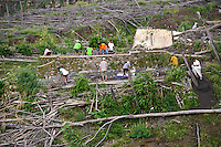 Volunteers clearing a graveyard partially buried in a pyroclastic flow, Gunung Merapi, Kinahrejo, Java, Indonesia.