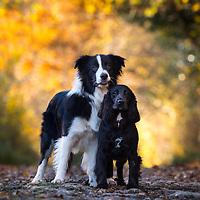 Max and Daisy