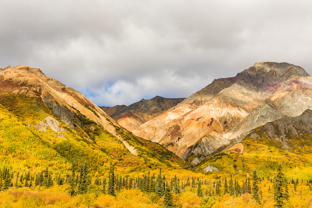 The mineral deposits of Sheep Mountain and the autumn foliage make a tapestry of colors in the Talkeetna Mountains of Southcentral Alaska. Afternoon.