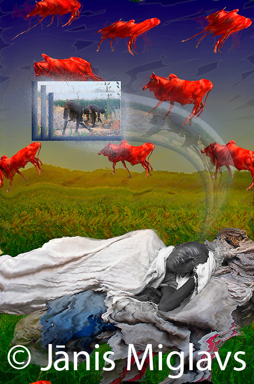 "This is the very first ""dream illustration I did. It is based on a 2001 interview when I asked the first group of Konso elders about their dreams, one of the four elders told what seems like an archetypal dream. ""I was looking at two things in the dream: fat bulls and red bulls. When I see red bulls, I know I will have enough grain and sorghum. The harvest will be good.""  Konso tribe, Ethiopia, Africa."