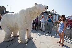 2018_07_26_Paula_the_Polar_Bear_in_Margate_MPA