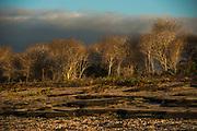 Scenic Puerto Egas, Santiago Island<br /> Galapagos<br /> Ecuador<br /> South America
