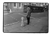A dog owner waits for traffic light to change with dog wearing a plastic cone medical collar its neck, England.
