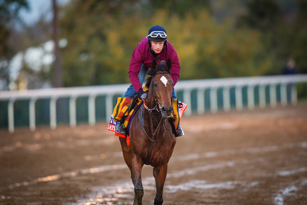 October 29, 2015: Legatissimo (IRE), trained by David Wachman and owned by Michael Tabor , Mrs. John Magnier  & Derrick Smith, exercises in preparation for the Breeders' Cup Filly & Mare Turf at Keeneland Race Track in Lexington, Kentucky. Alex Evers/ESW/CSM