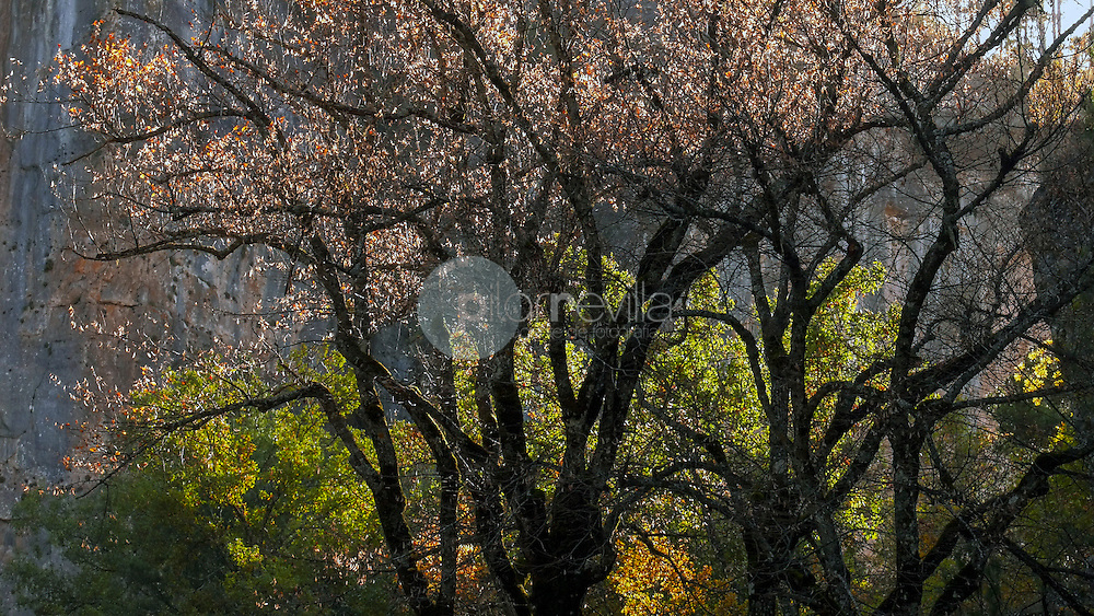 Ramas de árbol en otoño. Hoz de  Beteta. Serranía de Cuenca ©AntonioReal Hurtado / PILAR REVILLA