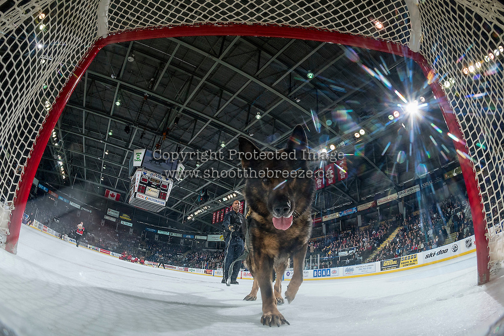 KELOWNA, CANADA - FEBRUARY 22: An RCMP dog checks out the net cam during intermission at the Kelowna Rockets against the Edmonton Oil Kings on February 22, 2017 at Prospera Place in Kelowna, British Columbia, Canada.  (Photo by Marissa Baecker/Shoot the Breeze)  *** Local Caption ***