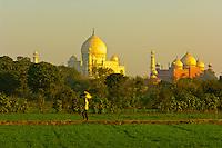 Man carrying a load through a path in a field, with the Taj Mahal behind, Agra, Uttar Pradesh, India
