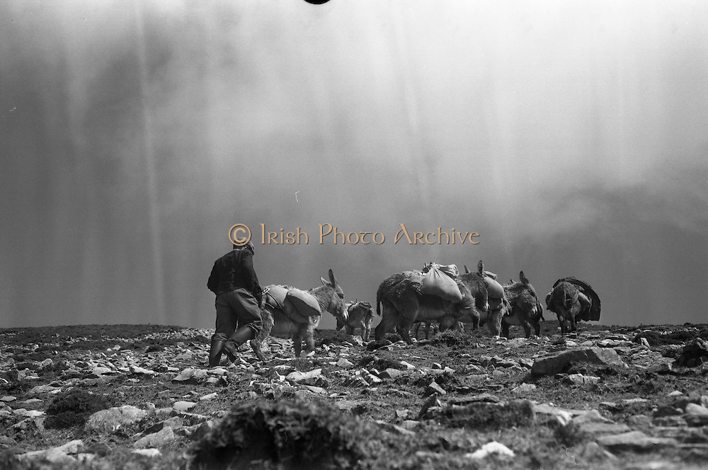 Farmers use donkeys to transport sand and cement up Croagh Patrick for work on the exterior of the Oratory. The donkeys climbing over rough ground..15-17.05.1962