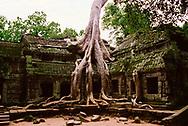 Ta Prohm Temple, Angkor Wat, Siem Reap, Cambodia
