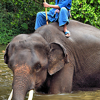Mahout Riding Elephant in Water in Hang Chat, Thailand<br />