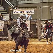 Bryan Rodeo Art