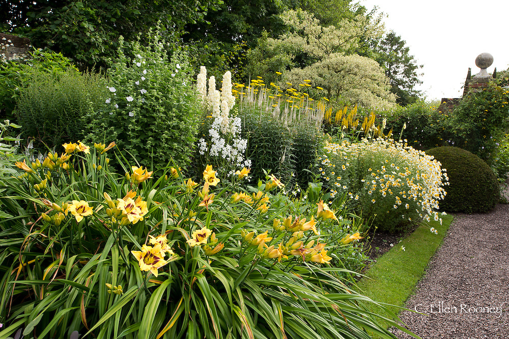 A gravel path through the main herbaceous border of Phlox, Delphinium and lilies at Wollerton Old Hall, Wollerton, Market Drayton, Shropshire, UK