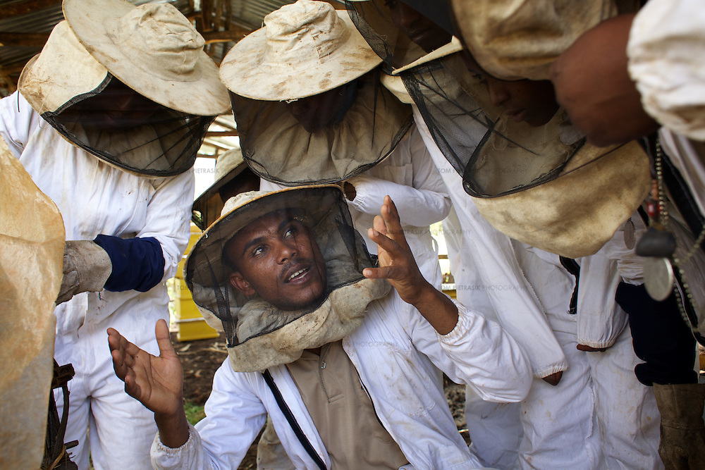 Metalem Fanthun, age 27, head of Ambrosia beekeeping demonstration and training centre in Mecha, teaches women from Mecha, the importance of maintaining modern hives.<br /> <br /> Harvesting honey supplements the income of small farmers in the Ethiopian region of Amhara where there is a long tradition of honey production. However, without the resources to properly invest in production and the continued use of of traditional, low-yielding hives, farmers have not been able to reap proper reward for their labour. <br /> <br /> The formation of the Zembaba Bee Products Development and Marketing Cooperative Union is an attempt to realize the potential of honey production in Amhara and ensure that the benefits reach small producers. <br /> <br /> By providing modern, high-yield hives, protective equipment and training to beekeepers, the Cooperative Union helps increase production and secure a steady supply of honey for which there is growing demand both in and beyond Ethiopia. The collective processing, marketing and distribution of Zembaba's &quot;Amar&quot; honey means that profits stay within the cooperative network of 3,500 beekeepers rather than being passed onto brokers and agents. The Union has signed an agreement with the multinational Ambrosia group to supply honey to the export market. <br /> <br /> Zembaba Bee Products Development and Marketing Cooperative Union also provides credit to individual members and trains carpenters in the production of modern hives. <br /> <br /> Photo: Tom Pietrasik<br /> Bahir Dhar, Amhara. Ethiopia<br /> November 17th 2010