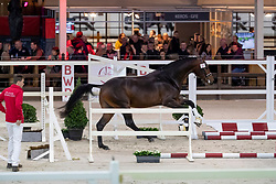 067, Magic Boy<br /> BWP Hengstenkeuring -  Lier 2020<br /> © Hippo Foto - Dirk Caremans<br />  17/01/2020