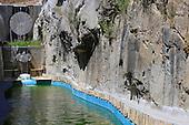 Natural Pool 751