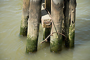 wooden dock post