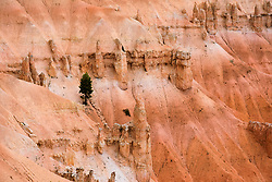 Lonely Tree, Bryce Canyon National Park, Utah, USA