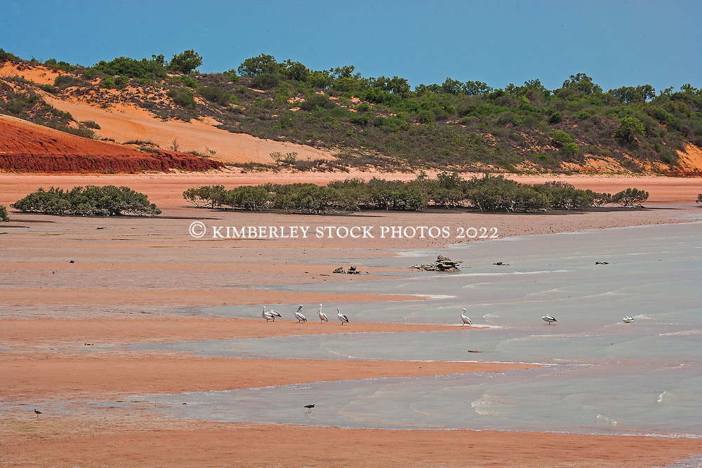 Pelicans and small shorebirds line the shores of Roebuck Bay on a rising tide.